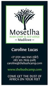 Mosetlha Bush Camp business cards